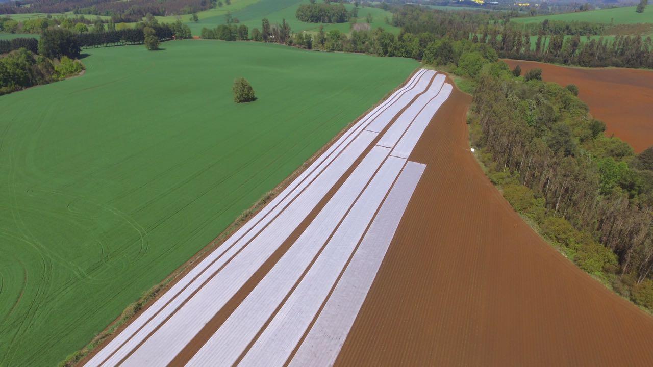 Manta térmica en agricultura. Protección contra heladas.