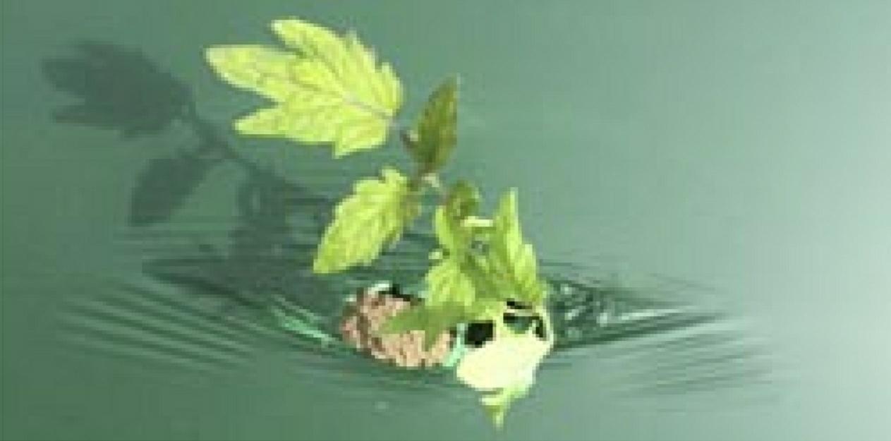 Plástico de acolchado biodegradable Biodream®